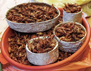 eating-insects-photo-01